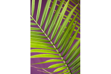03_Children_Palm_Fronds