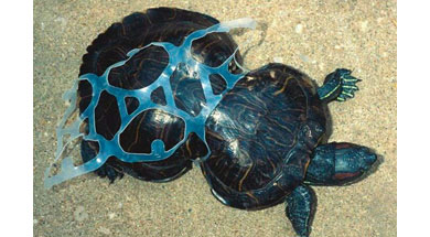04_Turtle_in_Plastic_Blog